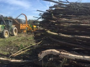 Land clearance St. Helens