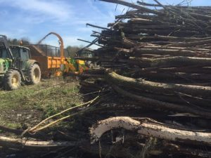 tree clearance Areas Cheshire